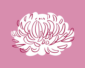 Pink Aster, soft and delicate colors, vector