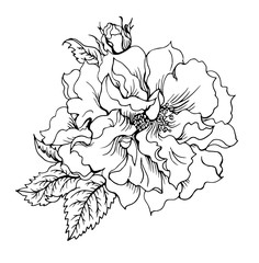 Rose floribunda, black and white graphic drawing.