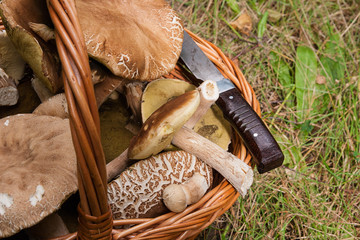 Porcini mushrooms (Boletus edulis, cep, penny bun, porcino or king bolete) in the wicker basket on natural background..