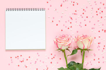 Two pink blooming fresh rose flower with notepad on pink background with colorful hearts