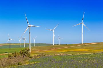 Wind Turbines in flowering fields in spring, South Africa