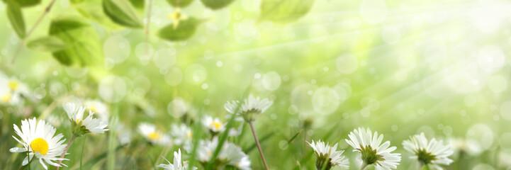 Frühling 422