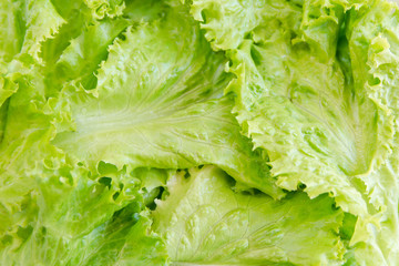 Salad leaf. Lettuce background. vegetables background