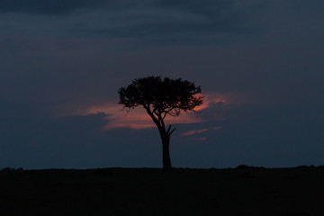 a single tree against a sunset in the Maasai Mara, Kenya