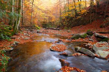 Stream in autumn beech forest