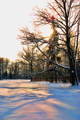 sunset in a snow-covered park in winter