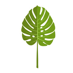 Green plant leaf, monstera. Isolated vector illustration on white background.