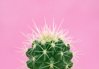 Papiers peints Cactus Tropical fashion cactus on pink paper background. Trendy minimal pop art style and colors.