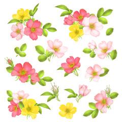 Dog-rose blooms. wild rose vector set