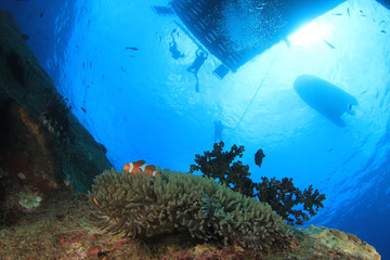 Scuba divers explore coral reef with fish