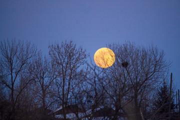 full moon rising over trees in the dark blue winter sky