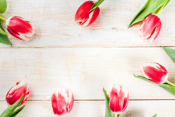 Background for congratulations, greeting cards. Fresh spring tulips flowers, on white wooden background top view copy space