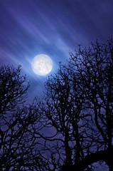 Full moon glowing in sky/Super full moon glowing in dark blue night sky above silhouetted oak trees