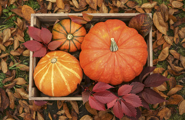 Pumpkins in wooden crate