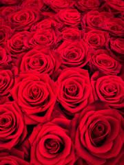 Rote Rosen als Hintergrund