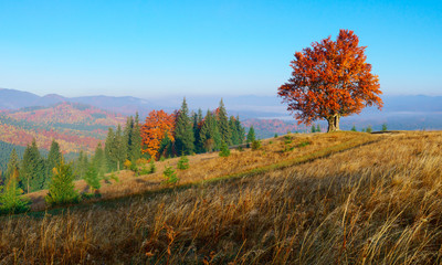 Colorful autumn landscape in mountains with lonley tree.
