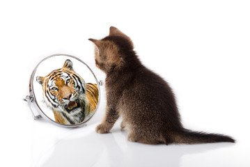 Zelfklevend Fotobehang Tijger kitten with mirror on white background. kitten looks in a mirror reflection of a tiger