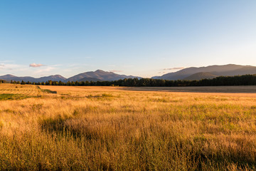 A golden field extends into the Adirondack mountains.