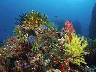 Intaktes. farbenfrohes Korallenriff, colorful tropical reef