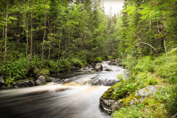 Long exposure of a forest stream with smooth water surroundet by trees and foliage.