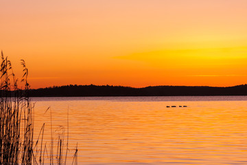 Beautiful orange winter sunset over water and land with birds on a lake and reed in the foreground.