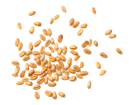wheat grains isolated on white background. top view