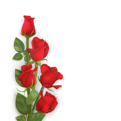 Delicate vector red roses