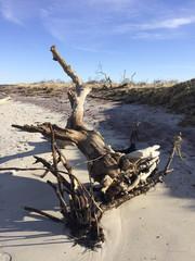 IMG_0978 Driftwood