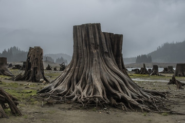 Tree stumps on field against sky