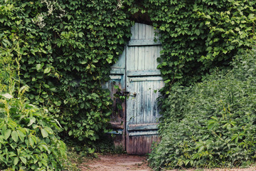 A vintage door with is ivy covered.