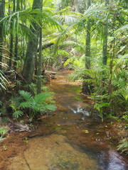 Rainforest and Stream