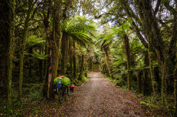 Rainforest bike ride
