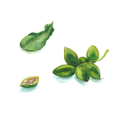 Graphic sketch of Manchurian walnut branch leaves
