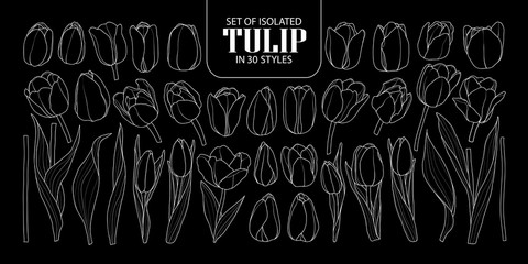 Set of isolated Tulip in 30 styles. Cute hand drawn flower vector illustration only white outline.