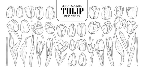 Set of isolated Tulip in 30 styles. Cute hand drawn flower vector illustration in black outline and white plane.