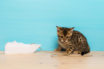 beautiful kitten playing with a paper boat on a wooden floor