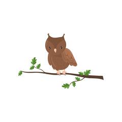 Cute owl woodland cartoon bird vector Illustration