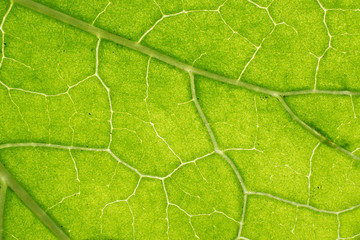 Background in abstract shape, macro photography. A detail of a leaf