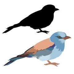 roller bird vector illustration flat style black silhouette