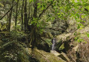 Waterfall Mini