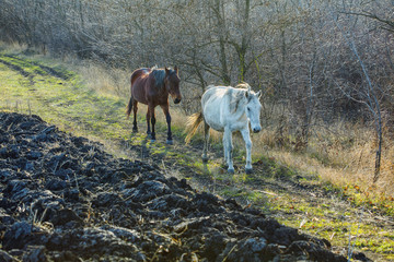 horses on the country road