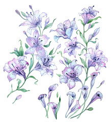 Watercolor painting flowers. Vintage composition of lilies on white background.