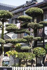 Bonsaibäume vor einem Haus in Kagoshima in Japan.