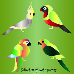 Collection of tropical parrots. Cartoon style - bright gradient sketches of birds