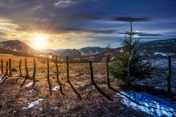 time change concept spruce tree on a hillside. beautiful landscape with grassy weathered slopes and some snow in mountains with sun and moon