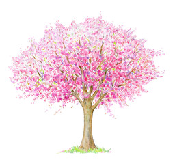 Spring blossoming  tree handdrawing isolated on white. Four seasons.  Tree  drawing one of four, spring.