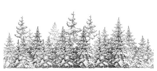 Fir trees forest  seamless element,  isolated on white,  handdrawing.