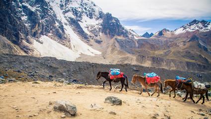 pack horses Inca trail