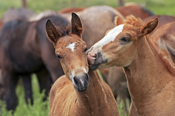 couple in love horses