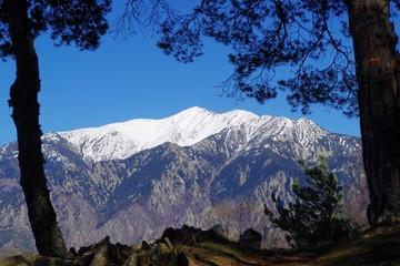 Massif du Canigou dans le Conflent dans les Pyrénées entre les sapins